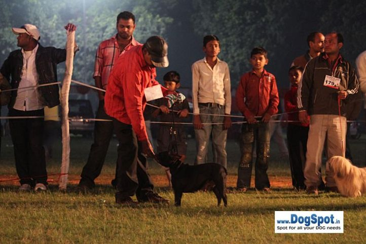 sw-8, french bulldog,, Lucknow Dog Show 2010, DogSpot.in