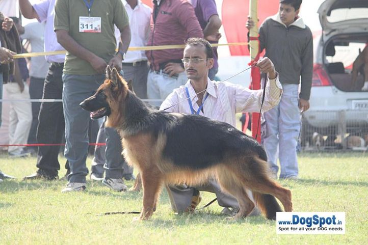 sw-8, gsd,, Lucknow Dog Show 2010, DogSpot.in