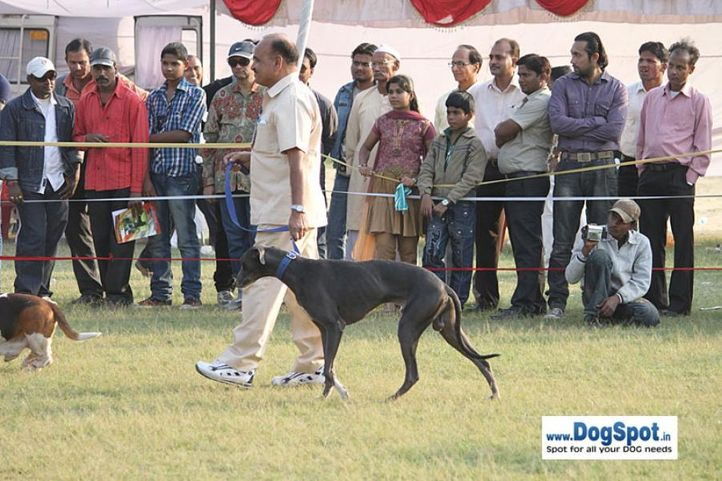 sw-8, hound,, Lucknow Dog Show 2010, DogSpot.in