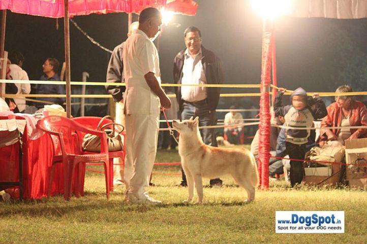 sw-8, siberian husky,, Lucknow Dog Show 2010, DogSpot.in