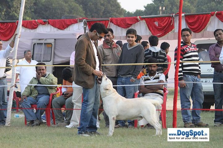 sw-8, lab, Lucknow Dog Show 2010, DogSpot.in