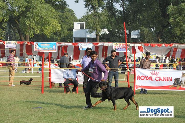 sw-8, rottweiler,, Lucknow Dog Show 2010, DogSpot.in