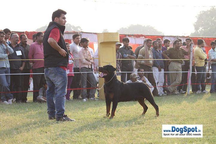 sw-8, ex-284,rottweiler,, DENSDARK'S FRIENDLY GESTURE, Rottweiler, DogSpot.in