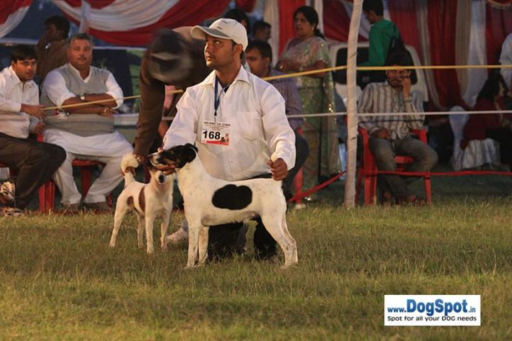 sw-8, lucknow dog show 2010, terrier, Lucknow Dog Show 2010, DogSpot.in