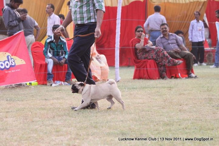 ex-38,pug,sw-43,, CHARMING GIRL, Pug, DogSpot.in