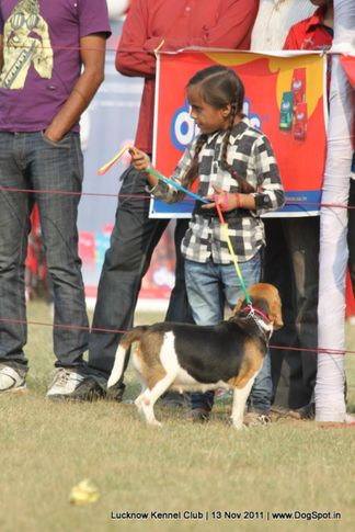 dog handling by child,sw-43,, Lucknow Dog Show 2011, DogSpot.in