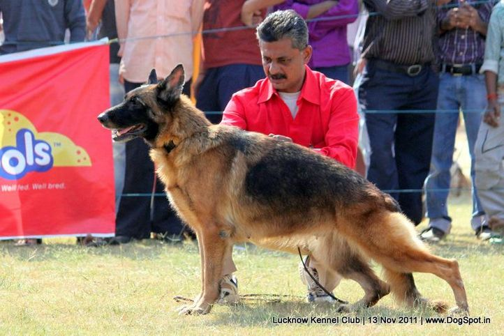 gsd,sw-43,, Lucknow Dog Show 2011, DogSpot.in