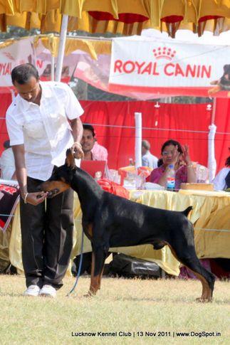 doberman,sw-43,, Lucknow Dog Show 2011, DogSpot.in