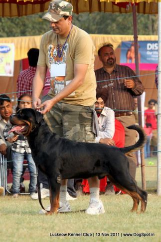 rottweiler,sw-43,, Lucknow Dog Show 2011, DogSpot.in