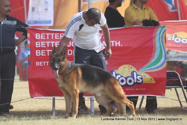 ex-280,gsd,sw-43,, CRONOS VOM EXTERNSTEIN, German Shepherd Dog, DogSpot.in