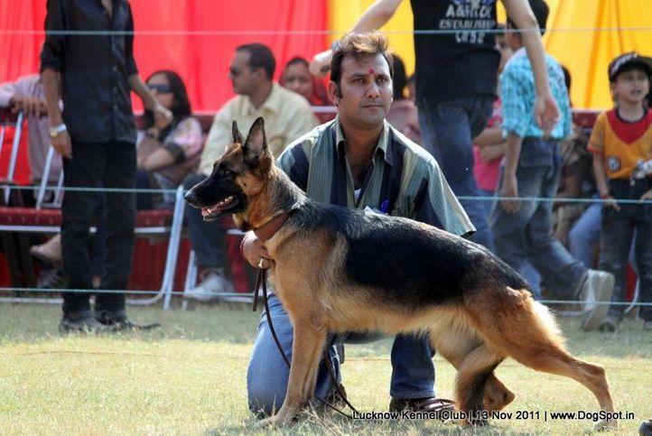 ex-279,gsd,sw-43,, FERA OF DADHWAL, German Shepherd Dog, DogSpot.in