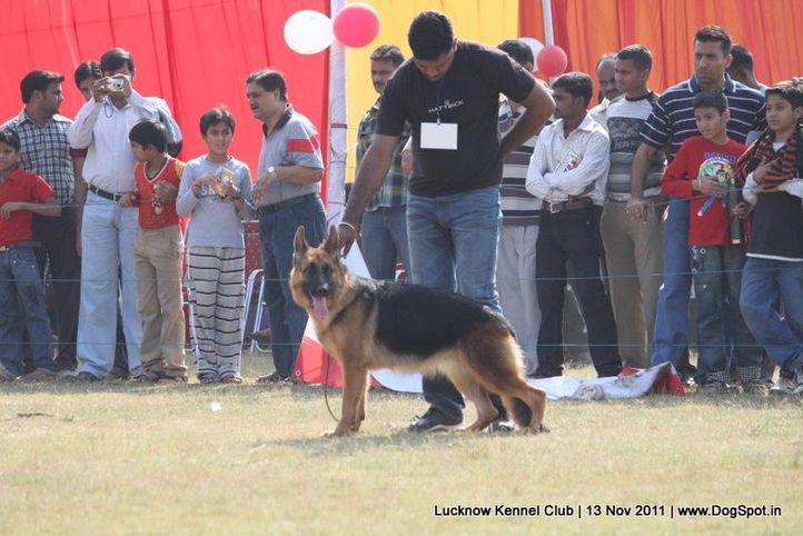 ex-273,gsd,sw-43,, HEENA OF BHALOTHIA, German Shepherd Dog, DogSpot.in