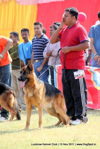 ex-267,gsd,sw-43,, WISKY FEETBACK, German Shepherd Dog, DogSpot.in