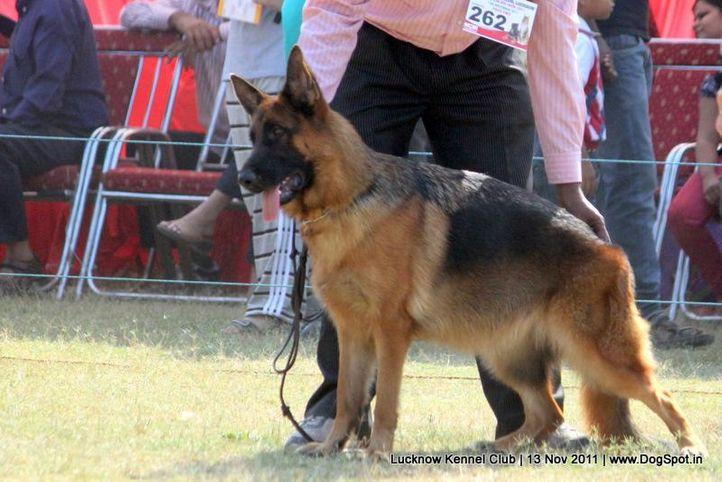 ex-262,gsd,sw-43,, GINA VON DER FREIHEIT WESTERHOLT, German Shepherd Dog, DogSpot.in
