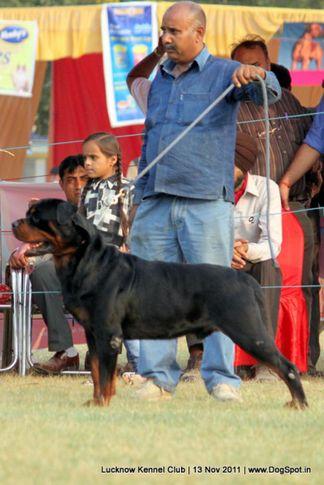 ex-227,rottweiler,sw-43,, IND. CH. ROSY'S CARLOS VON KELEMEN, Rottweiler, DogSpot.in