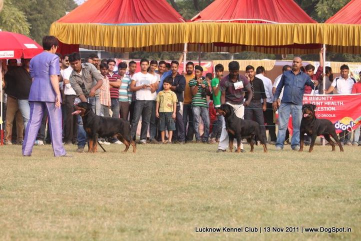 ex-213,rottweiler,sw-43,, CH Grewal`s Security, Rottweiler, DogSpot.in