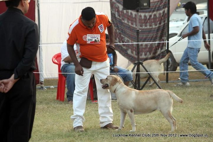 ex-102,labrador retriever,sw-71,, LAILA, Labrador Retriever, DogSpot.in