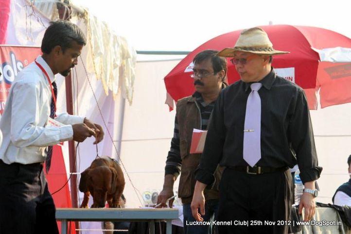 dachshund,sw-71,, Lucknow Dog Show 2012, DogSpot.in