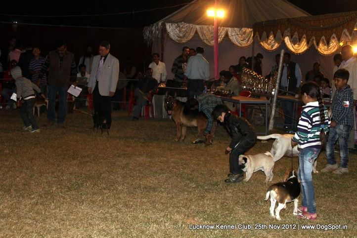 child handling,sw-71,, Lucknow Dog Show 2012, DogSpot.in