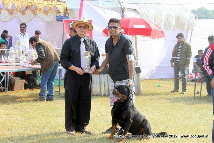 ex-188,judge,rottweiler,sw-71,, UNO VOM HAUS ENGEL, Rottweiler, DogSpot.in