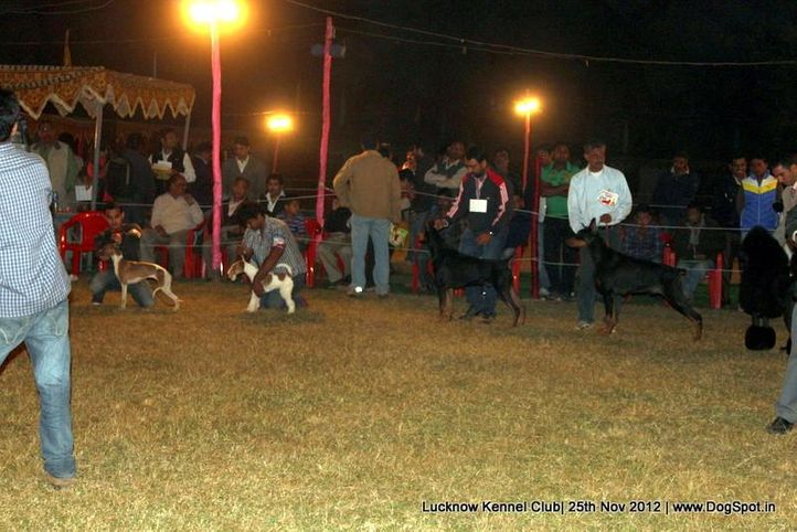 line up,sw-71,, Lucknow Dog Show 2012, DogSpot.in