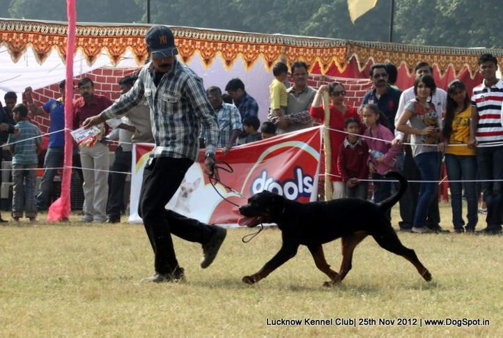 ex-196,rottweiler,sw-71,, MARCUS OF CARNIVOUS, Rottweiler, DogSpot.in
