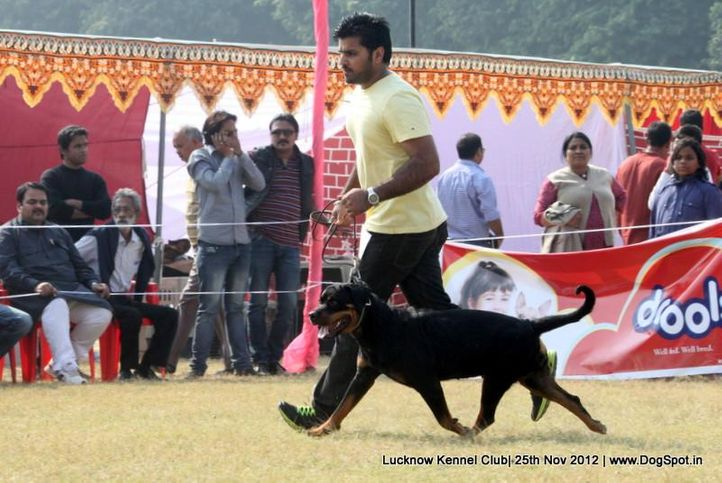 rottweiler,sw-71,, Lucknow Dog Show 2012, DogSpot.in