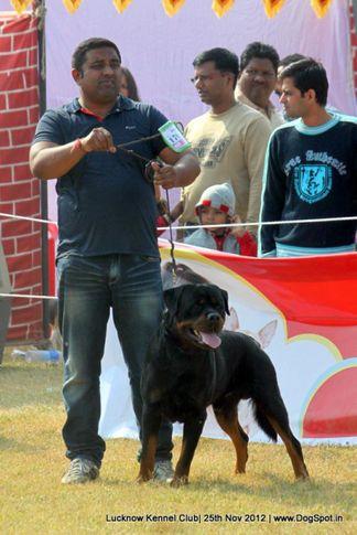 ex-170,rottweiler,sw-71,, EL DIABLO BRCKO STAR, Rottweiler, DogSpot.in