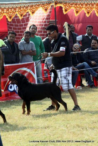 ex-188,rottweiler,sw-71,, UNO VOM HAUS ENGEL, Rottweiler, DogSpot.in