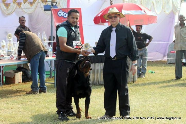 ex-248,rottweiler,sw-71,, Lucknow Dog Show 2012, DogSpot.in