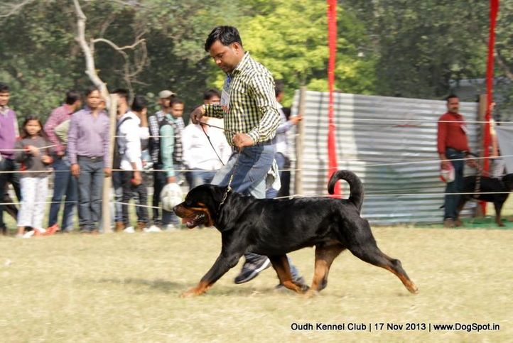 ex-178,rottweiler,sw-101,, Lucknow Dog Show 2013, DogSpot.in