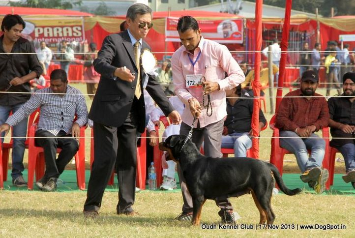 ex-172,rottweiler,sw-101,, Lucknow Dog Show 2013, DogSpot.in