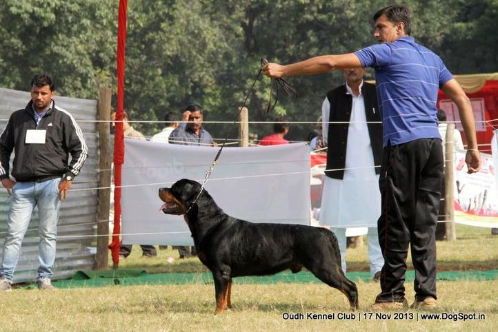 ex-186,rottweiler,sw-101,, Lucknow Dog Show 2013, DogSpot.in