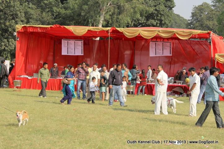 ground,sw-101,, Lucknow Dog Show 2013, DogSpot.in