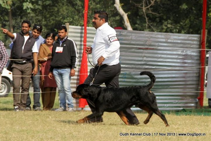 ex-169,rottweiler,sw-101,, Lucknow Dog Show 2013, DogSpot.in