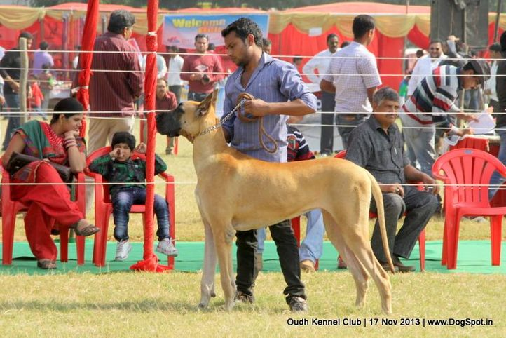 ex-158,great dane,sw-101,, Lucknow Dog Show 2013, DogSpot.in