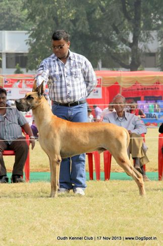 ex-161,great dane,sw-101,, Lucknow Dog Show 2013, DogSpot.in