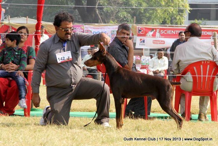 dobermann,ex-142,sw-101,, Lucknow Dog Show 2013, DogSpot.in