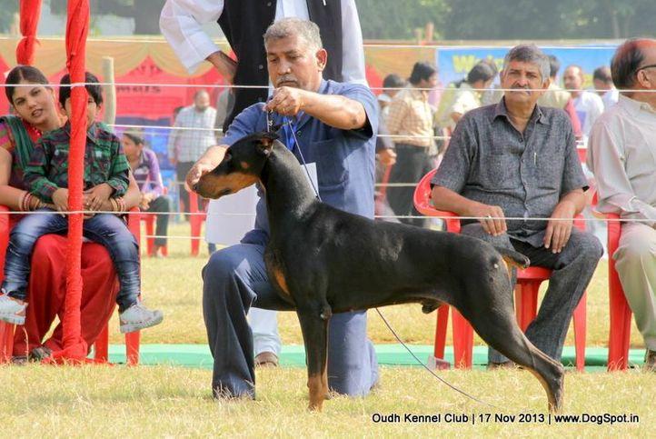 dobermann,ex-143,sw-101,, Lucknow Dog Show 2013, DogSpot.in