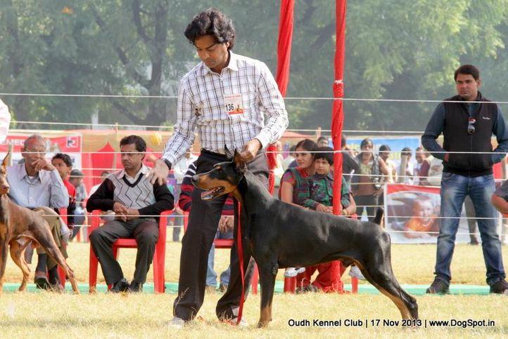 dobermann,ex-136,sw-101,, Lucknow Dog Show 2013, DogSpot.in