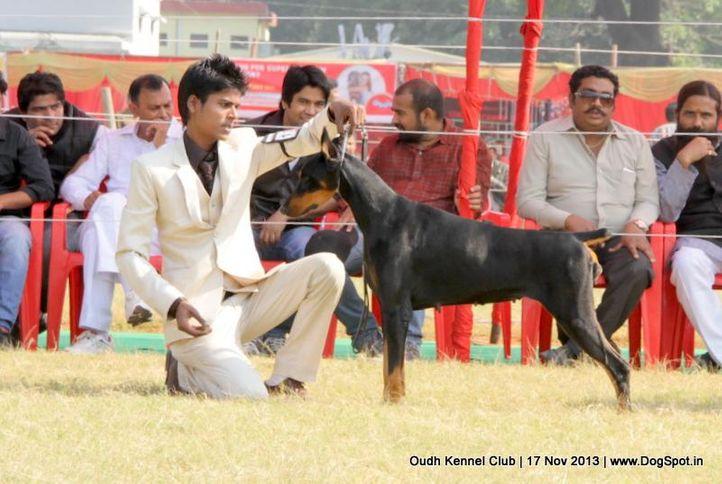 dobermann,ex-130,sw-101,, Lucknow Dog Show 2013, DogSpot.in