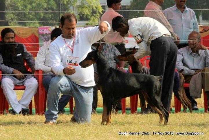 dobermann,ex-150,sw-101,, Lucknow Dog Show 2013, DogSpot.in