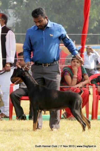 dobermann,ex-152,sw-101,, Lucknow Dog Show 2013, DogSpot.in