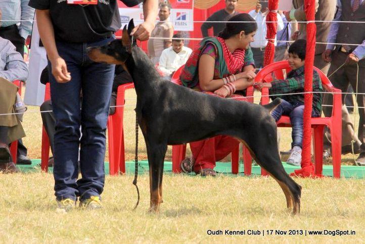 dobermann,ex-140,sw-101,, Lucknow Dog Show 2013, DogSpot.in