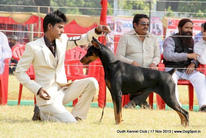 dobermann,ex-131,sw-101,, Lucknow Dog Show 2013, DogSpot.in