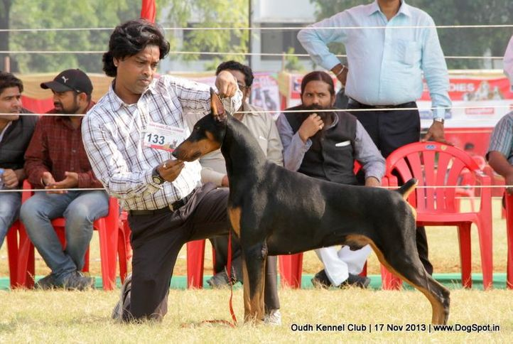 dobermann,ex-133,sw-101,, Lucknow Dog Show 2013, DogSpot.in