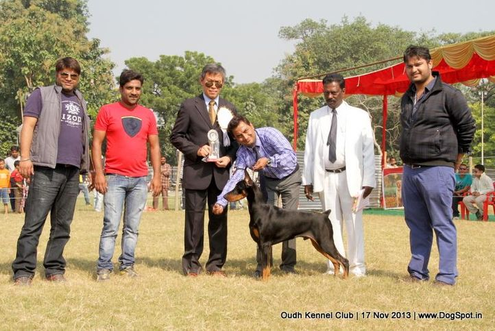 bob,dobermann,ex-148,sw-101,, Lucknow Dog Show 2013, DogSpot.in