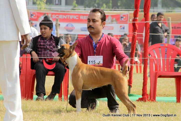 boxer,ex-115,sw-101,, Lucknow Dog Show 2013, DogSpot.in
