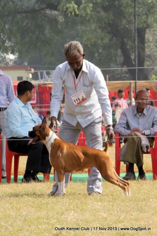 boxer,ex-119,sw-101,, Lucknow Dog Show 2013, DogSpot.in