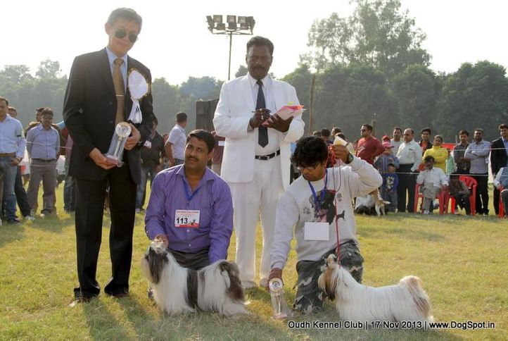 bob,ex-112,ex-113,shih tzu,sw-101,, Lucknow Dog Show 2013, DogSpot.in